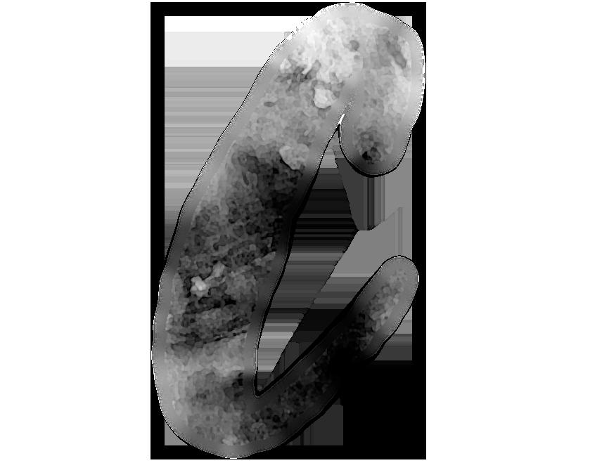Corella, l'Ombra del Borgia